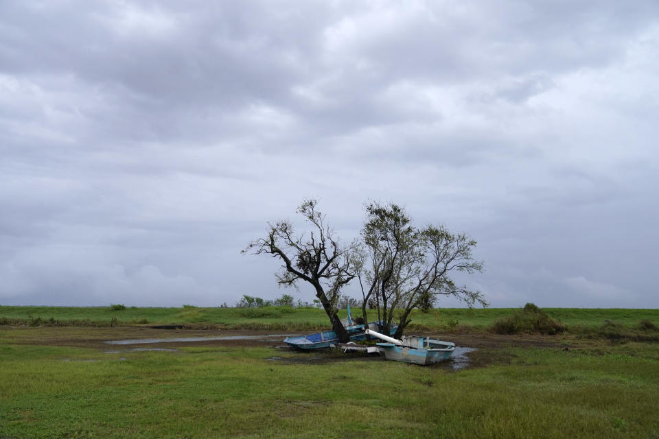 Stranded fishing boats sit against a tree on Isle de Jean Charles, La., a Native American community that is vanishing due to coastal erosion, in the aftermath of Hurricane Ida on Tuesday, Sept. 14, 2021. (AP Photo/Gerald Herbert)