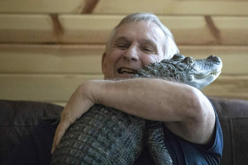 Joie Henney, 65, hugs his emotional support alligator named Wally inside their home in York Haven, Pa. on Tuesday, Jan. 22, 2019.  Henney said he received approval from his doctor to use Wally as his emotional support animal after not wanting to go on medication for depression. (Heather Khalifa/The Philadelphia Inquirer via AP)