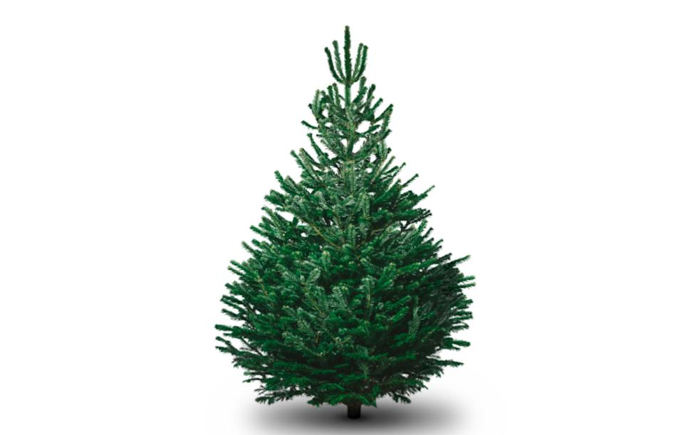 """<p><a rel=""""nofollow noopener"""" href=""""https://www.pinesandneedles.com/nondrop-christmas-trees-delivered"""" target=""""_blank"""" data-ylk=""""slk:Pines and Needles, from £38.95"""" class=""""link rapid-noclick-resp""""><i>Pines and Needles, from £38.95</i></a><br><br></p>"""