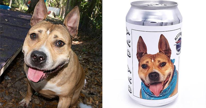 Shelter dog beer can campaign helps reunite missing dog with owner