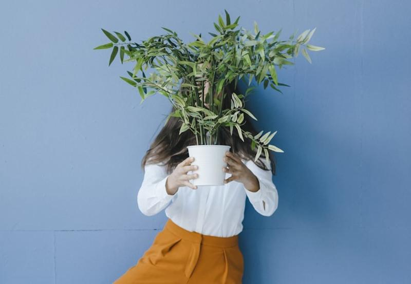 Working from home made me depressed—then I got plants