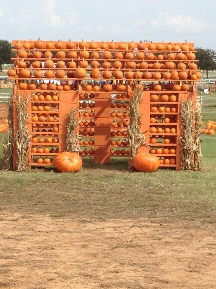 """<p><a href=""""http://flowermoundpumpkinpatch.com/"""" rel=""""nofollow noopener"""" target=""""_blank"""" data-ylk=""""slk:The Flower Mound's Pumpkin Patch"""" class=""""link rapid-noclick-resp"""">The Flower Mound's Pumpkin Patch</a> is all about making memories with your family. Hay rides, bounce houses, hay bale mazes, and dozens of cartoon cutouts on the <a href=""""https://go.redirectingat.com?id=74968X1596630&url=https%3A%2F%2Fwww.tripadvisor.com%2FTourism-g55844-Flower_Mound_Texas-Vacations.html&sref=https%3A%2F%2Fwww.countryliving.com%2Flife%2Ftravel%2Fg21273436%2Fpumpkin-farms-near-me%2F"""" rel=""""nofollow noopener"""" target=""""_blank"""" data-ylk=""""slk:Flower Mound, Texas"""" class=""""link rapid-noclick-resp"""">Flower Mound, Texas</a>, property mean there are plenty of cute spots for snapping festive family photos. And don't forget to visit their adorable """"Pumpkin House,"""" which is a perfect backdrop for even more family snapshots.</p><p><a class=""""link rapid-noclick-resp"""" href=""""https://go.redirectingat.com?id=74968X1596630&url=https%3A%2F%2Fwww.tripadvisor.com%2FAttractions-g55844-Activities-Flower_Mound_Texas.html&sref=https%3A%2F%2Fwww.countryliving.com%2Flife%2Ftravel%2Fg21273436%2Fpumpkin-farms-near-me%2F"""" rel=""""nofollow noopener"""" target=""""_blank"""" data-ylk=""""slk:PLAN YOUR TRIP"""">PLAN YOUR TRIP</a><br></p>"""