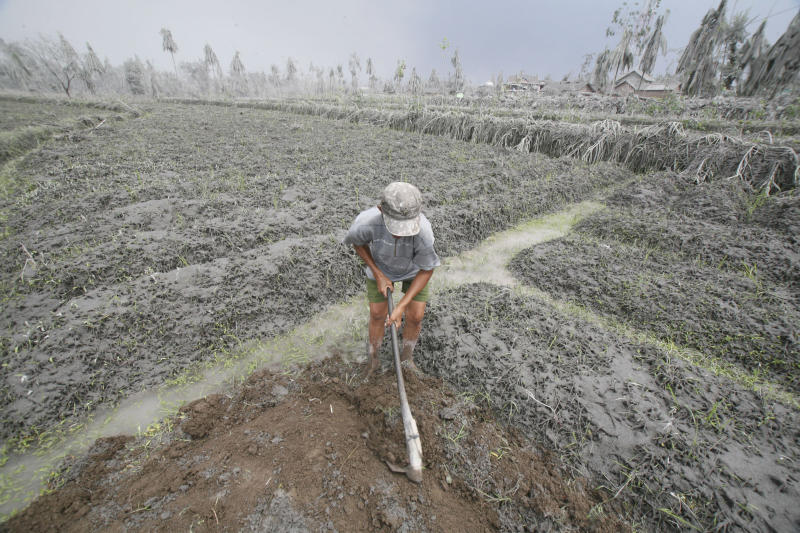 A villager works on his farm covered with volcanic ash from the eruption of Mount Merapi in Muntilan, Central Java, Indonesia, Sunday, Nov. 7, 2010. (AP Photo/Trisnadi)
