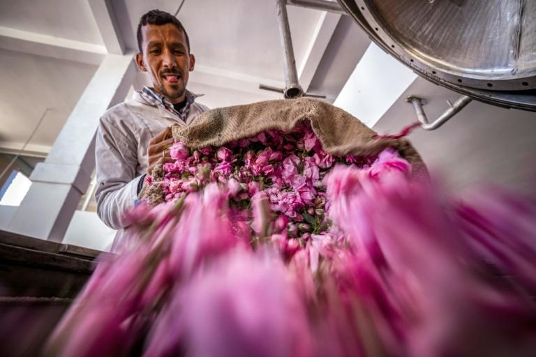 Moroccan rose exports are currently restricted mostly to rose water and dried flowers