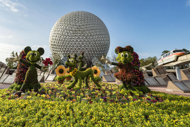 A magical floral topiary starring Disney characters Mickey Mouse, Minnie Mouse, Pluto and Goofy welcomes sunrise at the Epcot International Flower & Garden Festival. The festival features dozens of character topiaries, floral displays, creative gardens and exhibits, Outdoor Kitchens with herb and produce gardens. (Matt Stroshane/Disney)