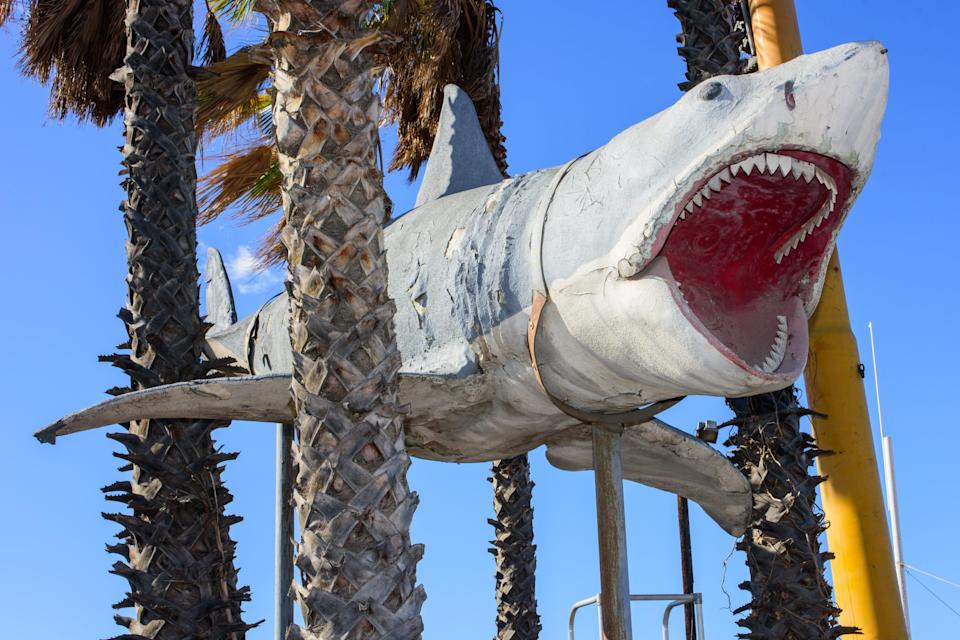 """The way """"Bruce"""" from """"Jaws"""" was."""