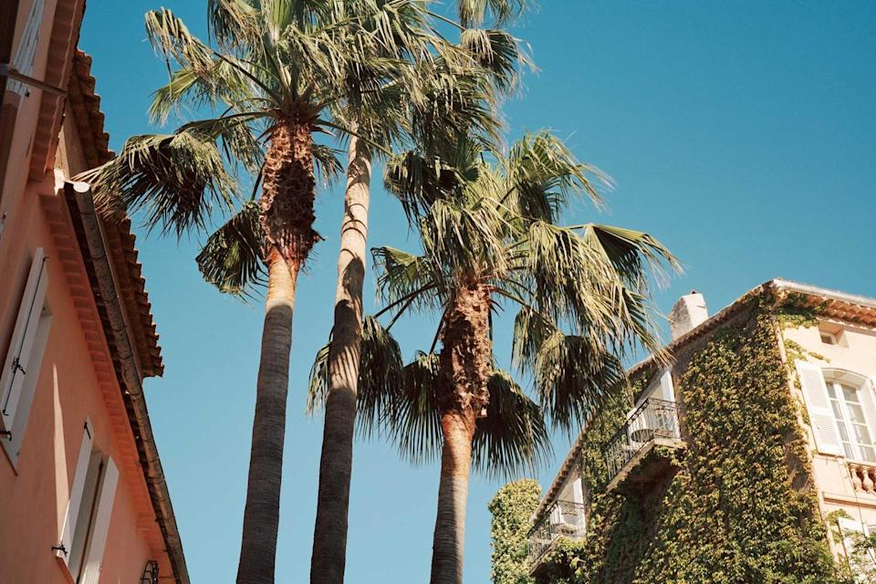 Palm trees and ivy covered pastel buildings in St Tropez, France