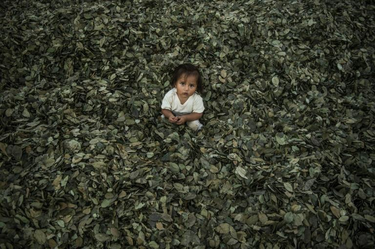 Peru is the world's second-largest producer of coca, after Colombia. About half of Peru's 49,000 hectares of coca plantations are found in the VRAEM valley (AFP/ERNESTO BENAVIDES)