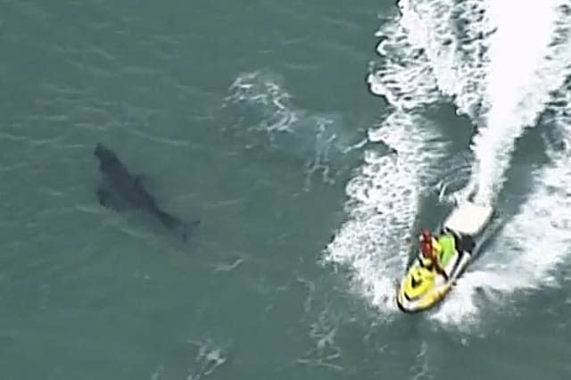 Surfer dies after New South Wales shark attack