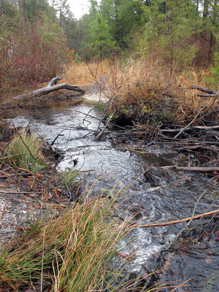 This Jan. 6, 2014 photo shows water flowing through a stream in Lakehurst, N.J., part of the ecologically sensitive Pinelands region. On March 25, 2019, the New Jersey Department of Environmental Protection ordered five companies that make chemicals used to stain-proof clothing and make non-stick cookware to fund a plan to clean up contamination of the state's environment, including waterways, that have been tainted by the presence of the chemicals. (AP Photo/Wayne Parry)