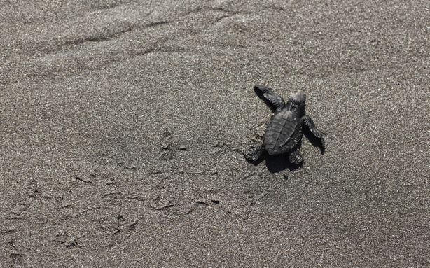 This College Student's 'Turtle Project' Proves Humans Are Jerks