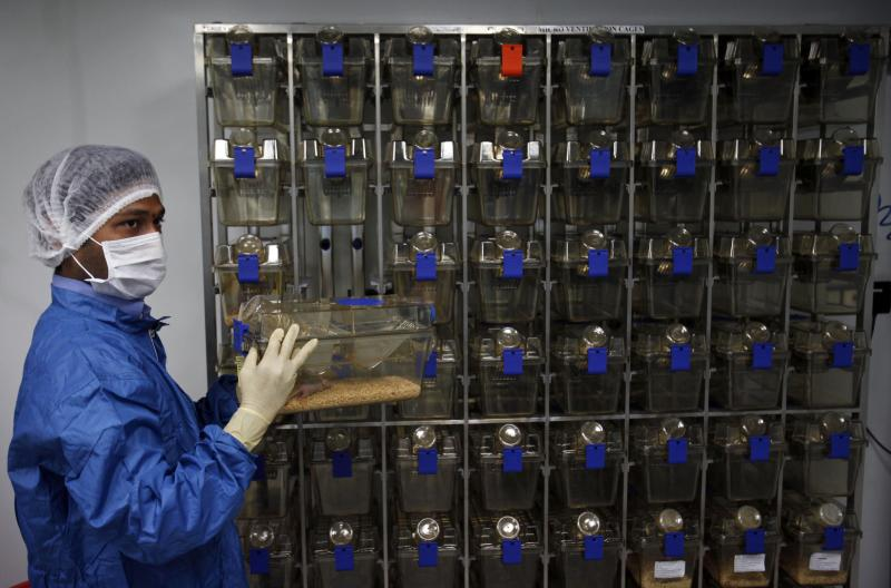 FILE – In this March 13, 2012 file photo, Indian pharmacologist removes mice from cages to study the reaction of cytotoxic drugs, inside a containment facility of the Research and Development Centre of Natco Pharma Ltd., in Hyderabad, India. India's patent appeals office has Monday, March 4, 2013, rejected international drug maker Bayer AG's plea to stop Indian company Natco Pharma Ltd. from manufacturing a cheaper generic version of a patented cancer drug. Bayer Corp., a subsidiary of the German pharma giant in Pittsburgh, Pennsylvania, markets sorefinib as Nexavar for about $5,600. Natco's version would cost Indian patients $175 a month. (AP Photo/Mahesh Kumar A., File)