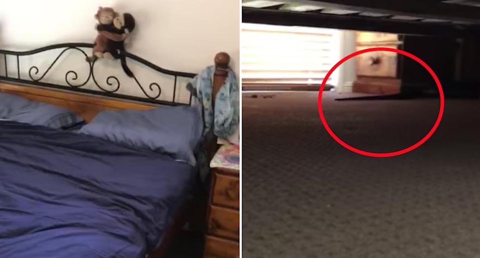 Pictured is the couple's bed (left) and the snake's tail underneath it (right).