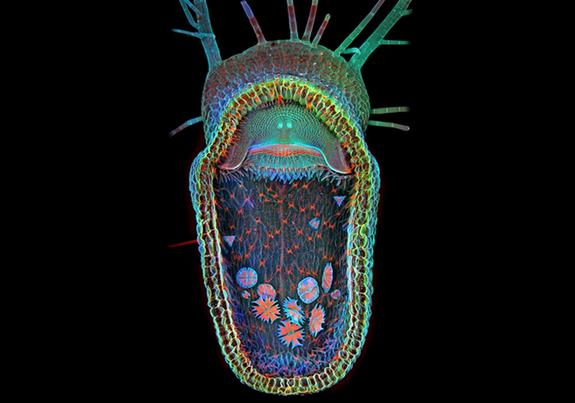 Gaping Maw of Aquatic Killer Wins Micro-Photo Competition