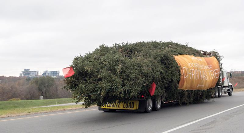 With a banner and a strand of holiday lights, the 75-foot Norway spruce heads off to Rockefeller Center on Nov. 9.