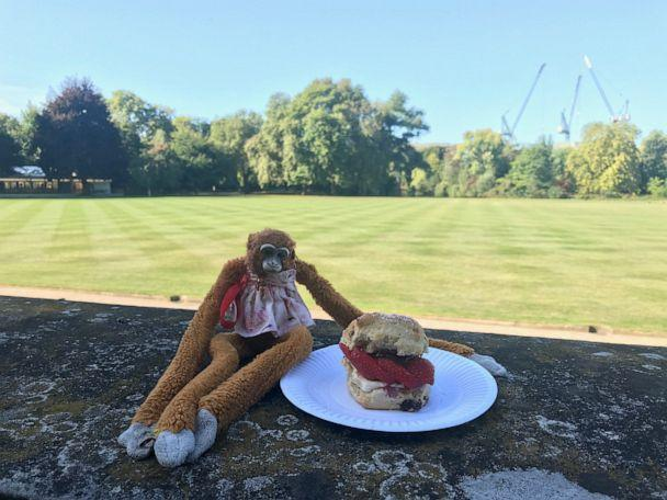PHOTO: Harriet stuffed monkey Buckingham Palace (Royal Collection Trust/© Her Majesty Queen Elizabeth II 2019)