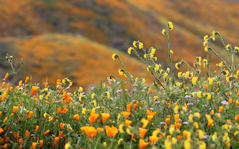 Jack Wallingston raced over to see the largest superbloom in over a decade