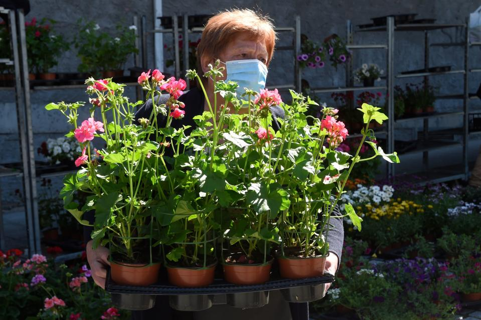 A woman wearing a face sells geraniums at a stall in a fair in Carballino, norhtwestern Spain, on May 16, 2020 under a national lockdown to prevent the spread of the COVID-19 disease. (Photo by MIGUEL RIOPA / AFP) (Photo by MIGUEL RIOPA/AFP via Getty Images)