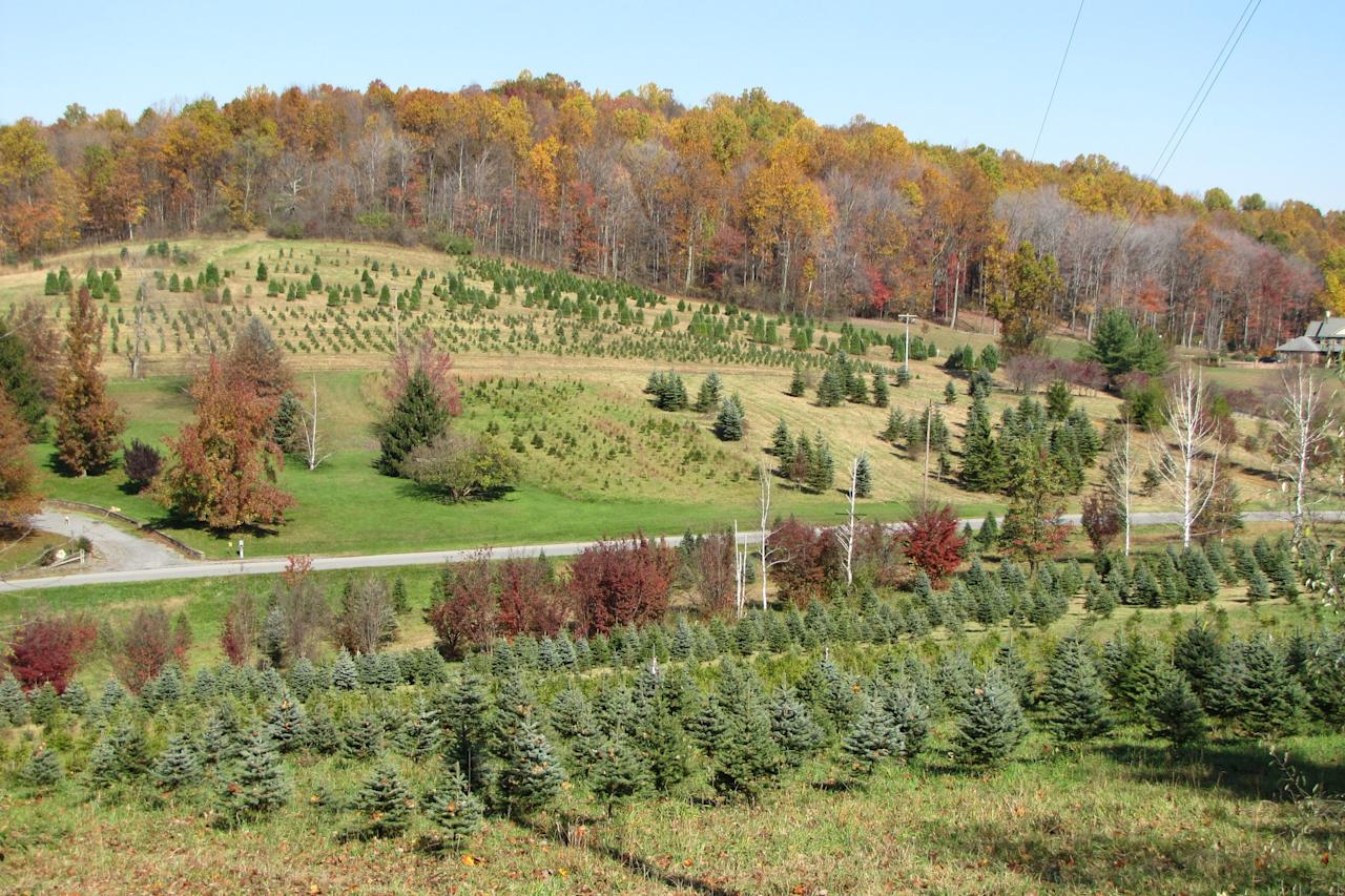 "<p>Now in its fourth generation, <a href=""http://www.lebanonchristmastree.com/"">Mt. Zion Nursery</a> is the oldest running Christmas Tree farm in West Virginia. Founder Robert Martin planted his first Christmas trees back in the 1940s with the help of his son, and the vintage farm has been running ever since. Start your own family Christmas tradition with the help of Mt. Zion Nursery's tree selection.</p>"