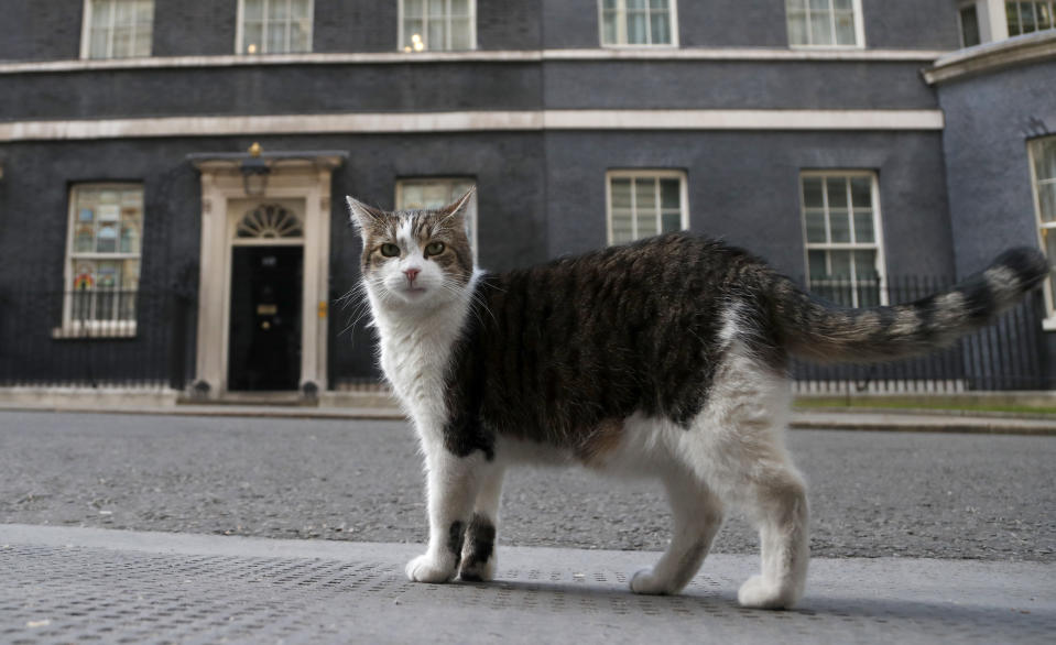 FILE -In this Thursday, May 21, 2020 file photo, Larry, the official 10 Downing Street cat walks outside 10 Downing Street before the nationwide Clap for Carers to recognise and support National Health Service (NHS) workers and carers fighting the coronavirus pandemic, in London. Monday, Feb. 15, 2021 marks the 10th anniversary of rescue cat Larry becoming Chief Mouser to the Cabinet Office in a bid to deal with a rat problem at 10 Downing Street. (AP Photo/Frank Augstein, file)