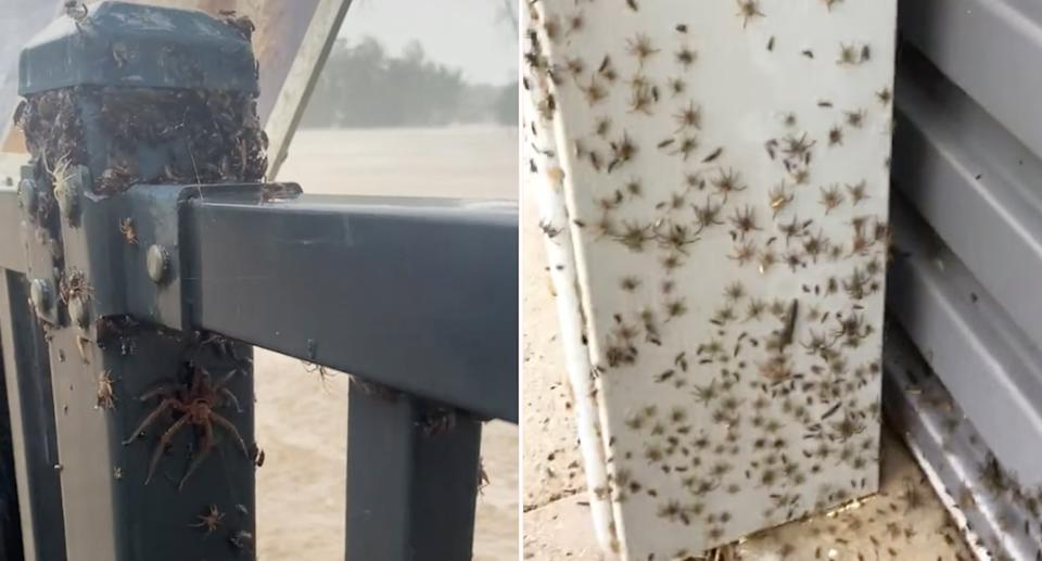 Spiders crawling up a fence pole (left) and spiders crawling into a garage (left) during heavy rain