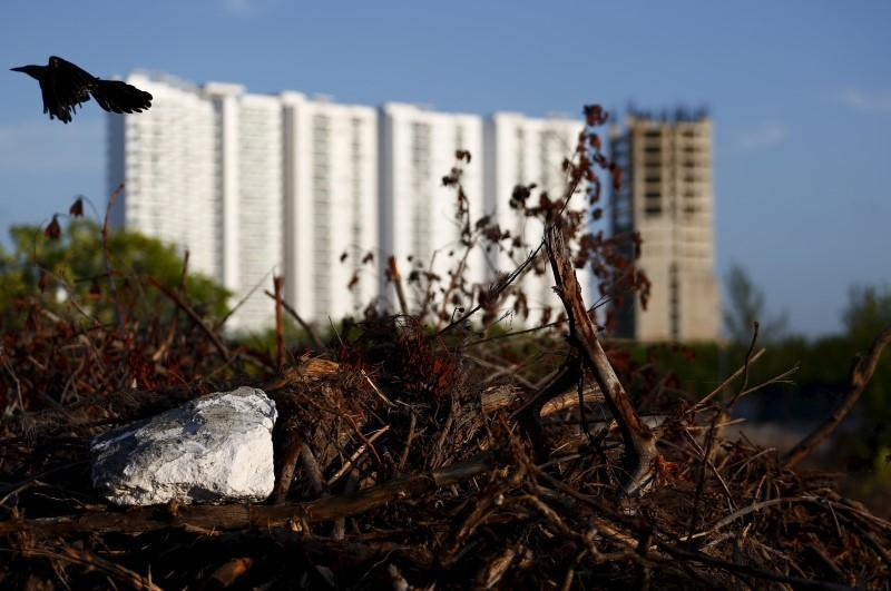 <p>Buildings are seen behind dying plants in Cancun, August 12, 2015.<i> (Photo: Reuters/Edgard Garrido)</i><br></p>
