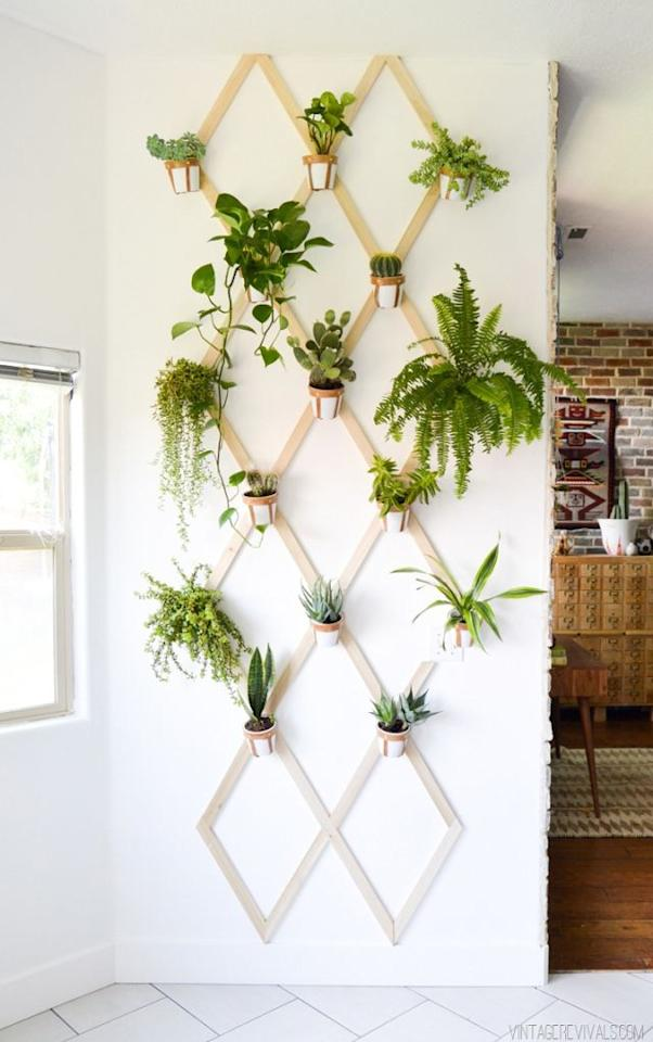 """<p>With this trellis wall garden, you have the optionto include several different types of plants.</p><p><strong>Get the tutorial at<a rel=""""nofollow"""" href=""""http://vintagerevivals.com/2015/07/diy-wood-and-leather-trellis-plant-wall"""">Vintage Revivals</a>.</strong></p>"""