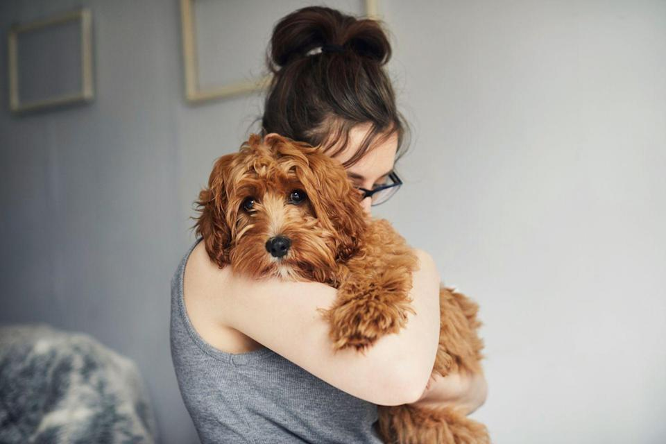 "<p>• ""I like my dog better than most people.""</p><p>• ""My dog is the only one who understands me."" </p><p>• ""Whoever said diamonds are a girl's best friend never owned a dog."" </p><p>• ""Make no bones about it, you're the best dog I know."" </p><p>• ""You can't buy happiness, but you can rescue it.""</p><p>• ""Dogs are my favorite people.""</p><p>• ""Dogs are not our whole life, but they make our lives whole.""</p><p>• ""The road to my heart is filled with paw prints.""</p>"