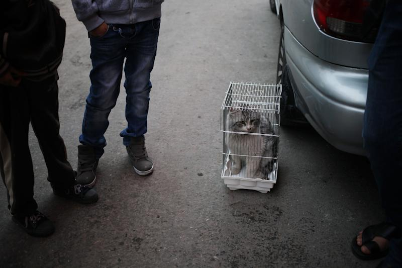 """In this Friday, Nov. 22, 2013 photo, men keep a stolen cat in a bird cage at the so-called """"thieves market"""" in downtown Amman, Jordan. Dog breeding coupled with dognapping is a thriving business in Jordan, where lax laws call for only a $7 fine for violators and police remain hesitant to pursue those suspected of animal abuse. Activists have campaigned for years for increased penalties, but lawmakers seem uninterested to pursue it in a culture where animal abuse remains rampant. (AP Photo/Mohammad Hannon)"""