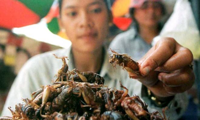 People in Cambodia (pictured) and other places already eat the little critters. So why don't we?