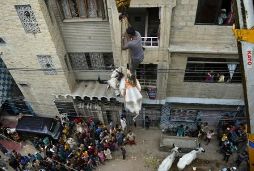 A bull is lowered by crane from the roof of a building in preparation for the annual Muslim festival of Eid al-Adha in Karachi