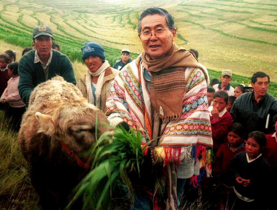 Peru's President Alberto Fujimori feeds a cow during his visit to Junin, April 26. Official results from last months election showed President Alberto Fujimori fell just shy of the majority needed to avoid a runoff for an unprecedented third term, setting the stage for a showdown with international economist Alejandro Toledo.    PO/RCS