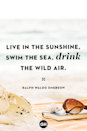 <p>Live in the sunshine, swim the sea, drink the wild air.</p>