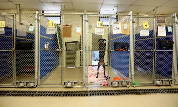 A dog that has been adopted but not yet taken to its new home remained in one of the few occupied pens at the Humane Society of Westchester in New Rochelle, New York, on March 26, 2020.