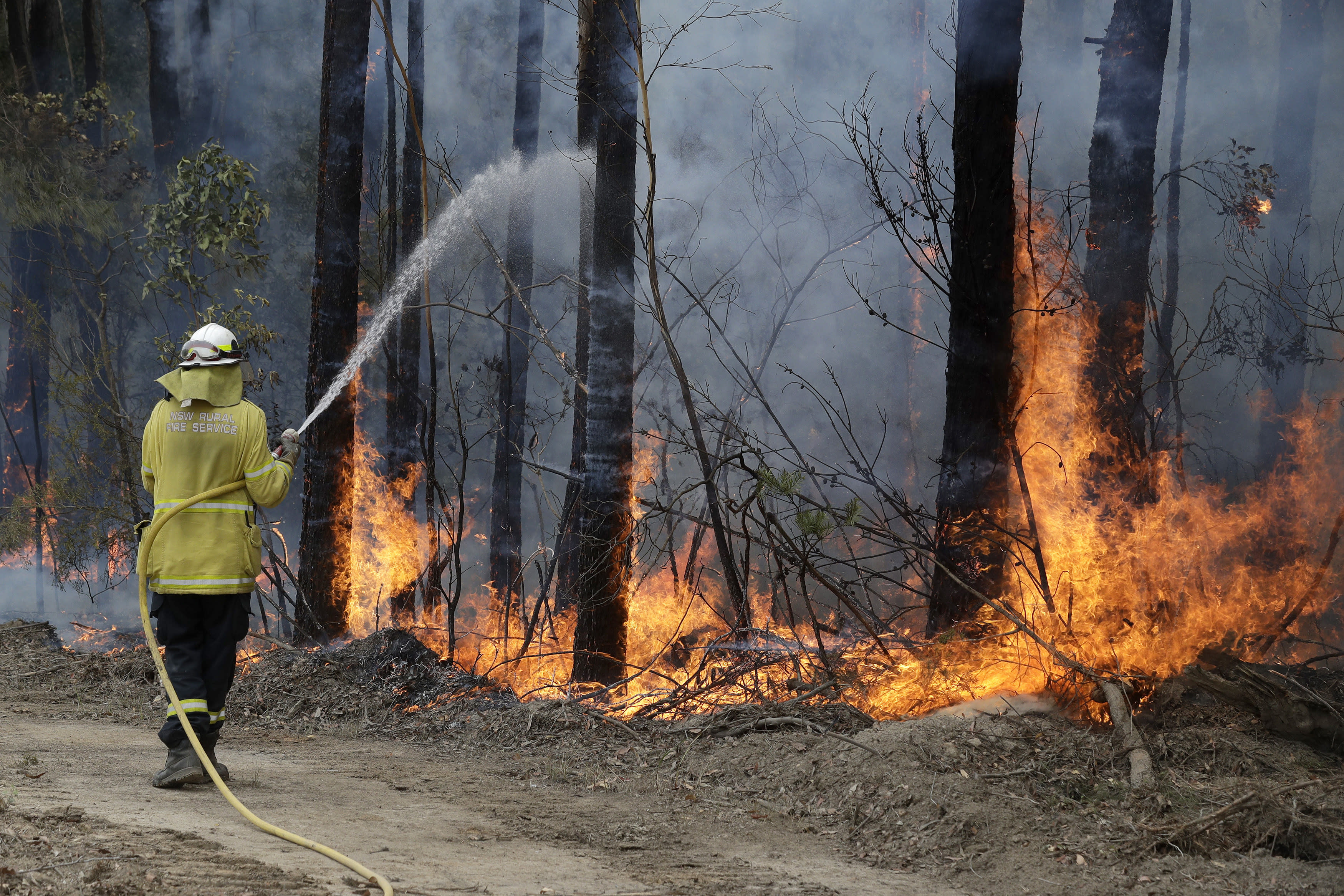 A firefighter manages a controlled burn near Tomerong, Australia, Wednesday, Jan. 8, 2020, in an effort to contain a larger fire nearby. Around 2,300 firefighters in New South Wales state were making the most of relatively benign conditions by frantically consolidating containment lines around more than 110 blazes and patrolling for lightning strikes, state Rural Fire Service Commissioner Shane Fitzsimmons said. (AP Photo/Rick Rycroft)