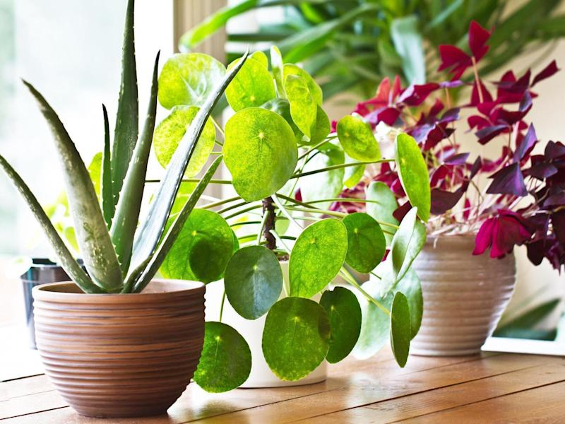 Houseplants can moisturise your skin (Stock)