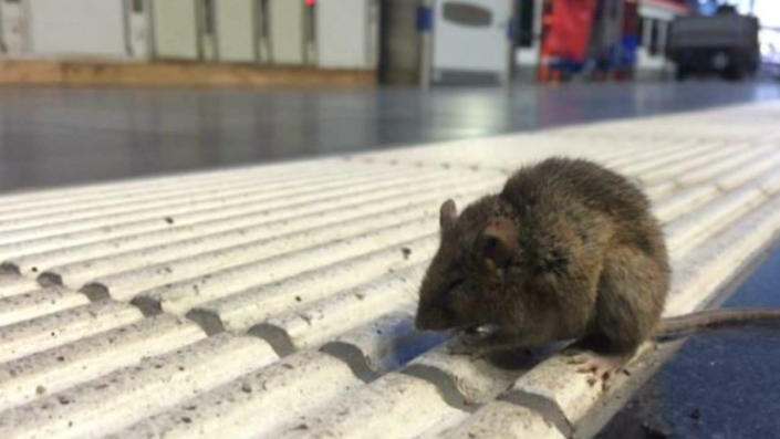 It's getting colder outside - it's time to mouse-proof your home