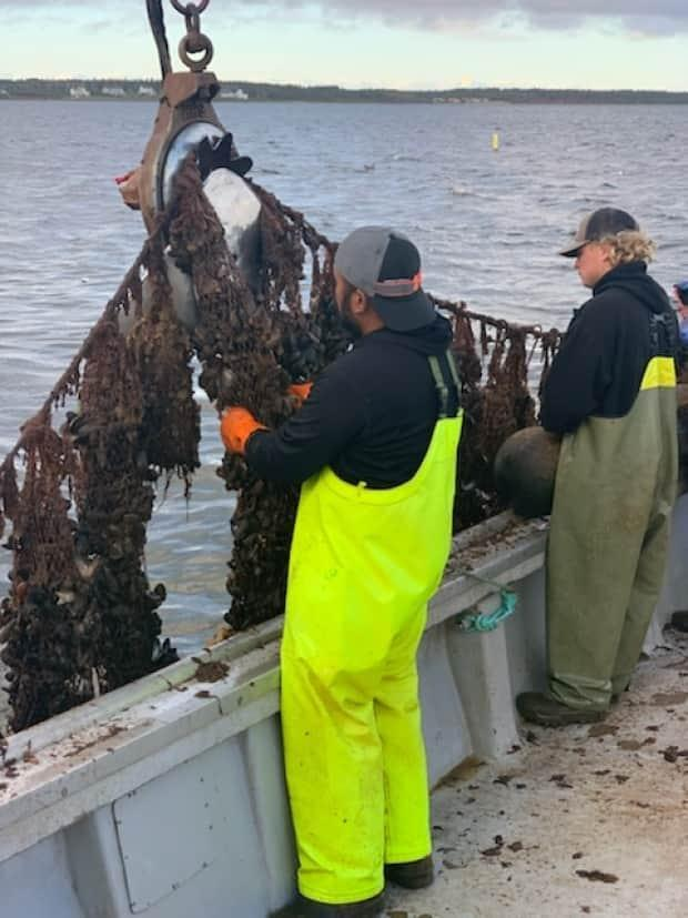 Eissa Mir got a summer job harvesting mussels out of Tracadie Harbour. (Andy Handrahan - image credit)
