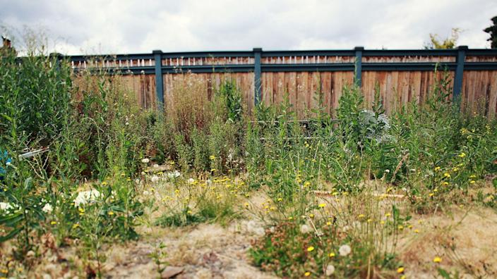 A lot of ugly plants next to a pretty fence.