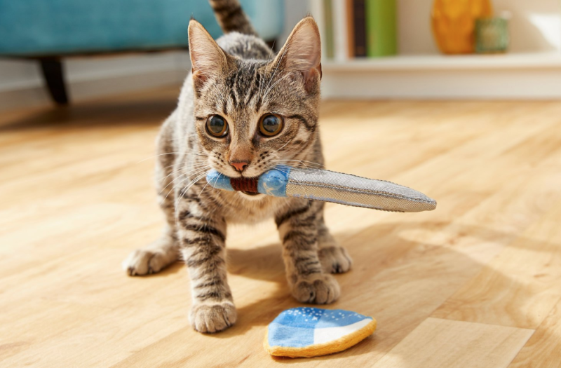 Is your cat a knight in shining armor? We say yes. (Photo: Chewy)
