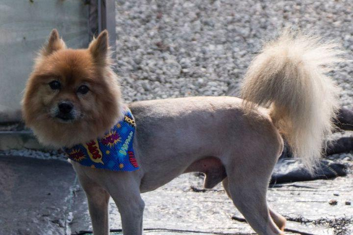 """<img alt=""""""""/><p>It's that time of year again. Temperatures are rising, the sun is spending a little more time outside, and pets everywhere are making the world more glamorous with their summer haircuts.</p> <p>Now, not all pets need a summer cut. Many shed naturally in the summer anyway, and a multi-layered coat <a rel=""""nofollow"""" href=""""https://www.aspca.org/news/heat-wave-should-you-shave-your-pet"""">often serves as insulation</a> to help them stay cool. But in some cases, a trim helps — with the added bonus of being extremely cute.</p> <div><p>SEE ALSO: <a rel=""""nofollow"""" href=""""http://mashable.com/2017/04/23/dog-breeds-ranked/?utm_campaign=Mash-BD-Synd-Yahoo-Watercooler-Full&utm_cid=Mash-BD-Synd-Yahoo-Watercooler-Full"""">Dogs, ranked</a></p></div> <p>Enjoy:</p> <div> <div><blockquote><div> <div><div></div></div> <p><a rel=""""nofollow"""" href=""""https://www.instagram.com/p/BTUaijtltgI/"""">A post shared by Wilson Fields (@wiiilsonthegolden)</a> on Apr 25, 2017 at 11:49am PDT</p>  </div></blockquote></div>   </div> <div><div><blockquote><div> <div><div></div></div> <p><a rel=""""nofollow"""" href=""""https://www.instagram.com/p/BTSO0KjlFe1/"""">A post shared by Pita (@livinlapitaloca)</a> on Apr 24, 2017 at 3:28pm PDT</p>  </div></blockquote></div></div> <div><p></p></div>  <div><div><blockquote><div> <div><div></div></div> <p><a rel=""""nofollow"""" href=""""https://www.instagram.com/p/BTKmz33gvk6/"""">A post shared by Pawmyheart Mobilepetspa (@pawmyheart_petspa)</a> on Apr 21, 2017 at 4:24pm PDT</p>  </div></blockquote></div></div> <div><p></p></div>  <div>    </div> <div><div><blockquote><div> <div><div></div></div> <p><a rel=""""nofollow"""" href=""""https://www.instagram.com/p/BStkos-jmo-/"""">A post shared by Tofu and Gertrude (@tofuandgertrude)</a> on Apr 10, 2017 at 9:47am PDT</p>  </div></blockquote></div></div> <div><div><blockquote><div> <div><div></div></div> <p><a rel=""""nofollow"""" href=""""https://www.instagram.com/p/BS9IPysgAD0/"""">A post shared by Mochi The Havapoo (@mochiliciouspoo)</a> on Apr 16, 2017 at 1"""
