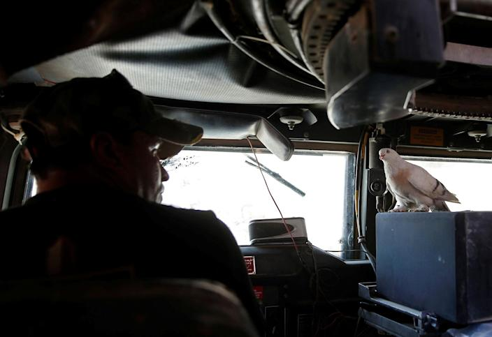 <p>An Iraqi soldier looks at his pet dove as he drives an armoured fighting vehicle on the frontline in the Old City of West Mosul, Iraq June 27, 2017. (Photo: Erik De Castro/Reuters) </p>