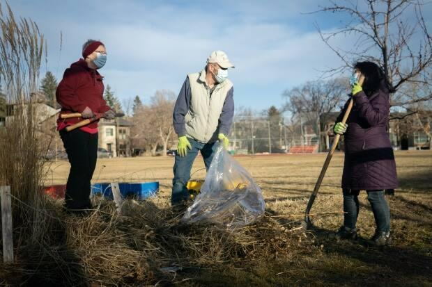 Alavi and her friends Maureen and David Burhoe clean and prune at the Parkdale community garden. 'I'll admit, they did most of the work as I was a beginner,' Alavi says.