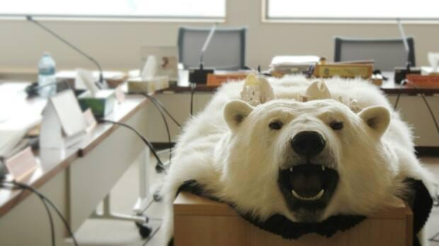 A polar bear hide decorates a central table in the hamlet council chamber in Kugaaruk, Nunavut. The Nunavut government is bringing unsellable bear hides back to the territory from an Ontario auction house that had around 300 in storage.  (John Last/CBC - image credit)