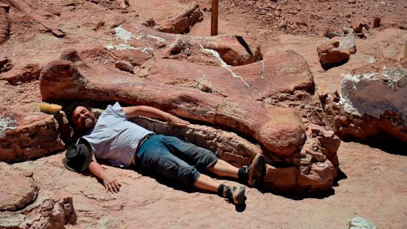 Researchers Discover Fossils of Largest Dino Believed to Ever Walk the Earth