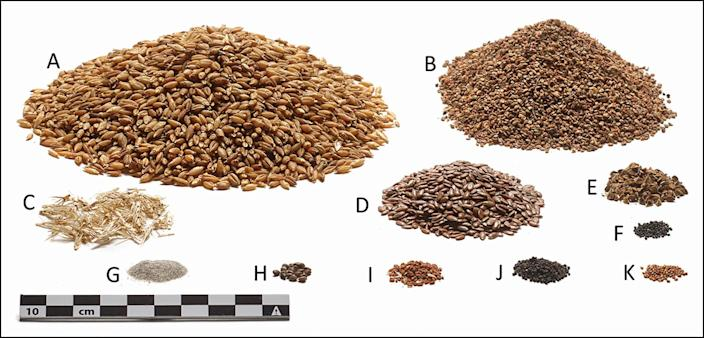 The ingredients of the Tollund Man's last meal, in relative quantities: A) barley seeds, B) pale persicaria, C) barley fragments, D) flax, E) black-bindweed, F)