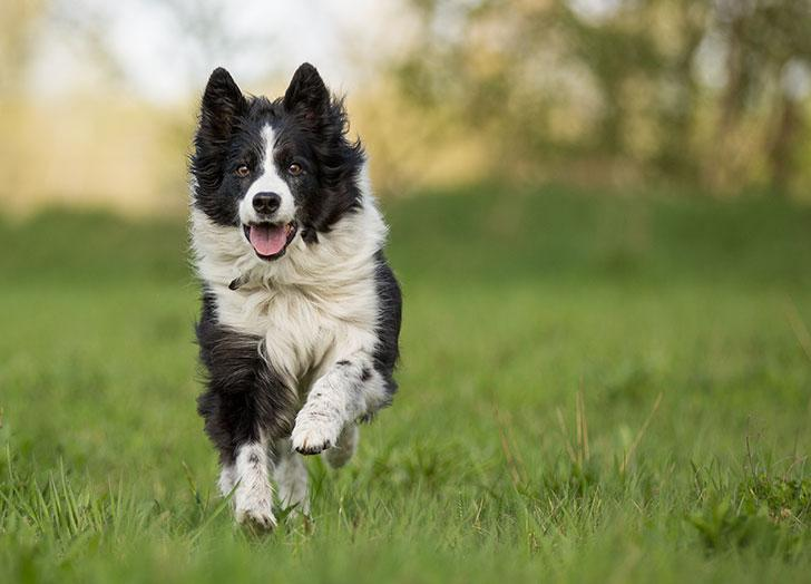 These Are The 25 Smartest Dog Breeds