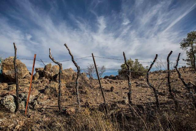 Scenes from along the Mexican border in Nogales, Arizona. West of Nogales, the fencing ends and this barbed-wire fence is the international boundary. (This is on Dan Bell's Ranch.)