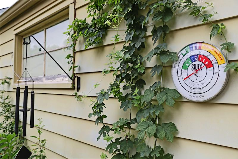 Hops grow outside homebrewer Rich Heller's house. The homegrown hops don't make it into his beers but are just for show.