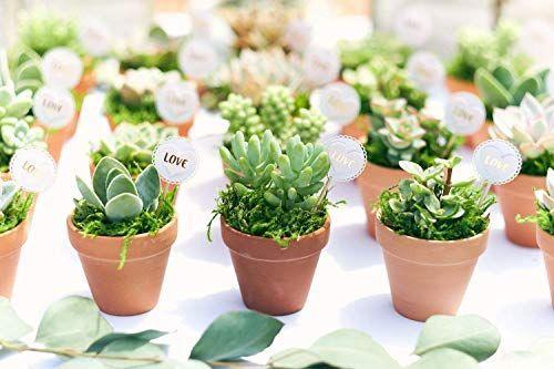 """<p><strong>Shop Succulents</strong></p><p>amazon.com</p><p><a href=""""https://www.amazon.com/dp/B083Q3KKB2?tag=syn-yahoo-20&ascsubtag=%5Bartid%7C10052.g.19574855%5Bsrc%7Cyahoo-us"""" rel=""""nofollow noopener"""" target=""""_blank"""" data-ylk=""""slk:Shop Now"""" class=""""link rapid-noclick-resp"""">Shop Now</a></p><p>You can get anything on Amazon, including this assortment of succulents. Since Amazon launched its <a href=""""https://www.elledecor.com/shopping/best-stores/g14107738/amazon-garden-shop/"""" rel=""""nofollow noopener"""" target=""""_blank"""" data-ylk=""""slk:garden shop"""" class=""""link rapid-noclick-resp"""">garden shop</a>, it has streamlined the process of finding and buying live plants on its site. A ton of the plants are available on Amazon Prime, in case you need plants and you need 'em fast.</p>"""